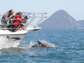 Swim with Dolphins in Whakatane, NZ